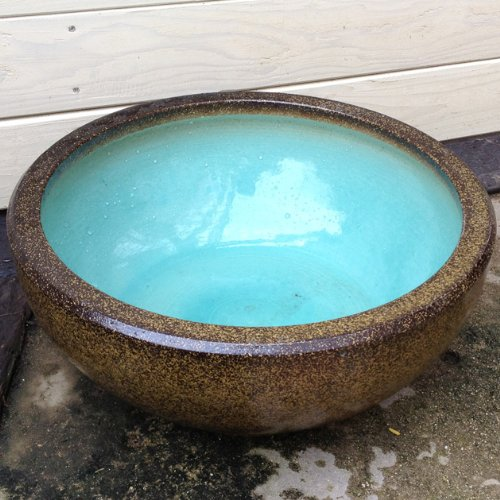 睡蓮(すいれん)鉢/はす鉢/めだか鉢(13号浅鉢)【金ソバ】 B008RH2ILW