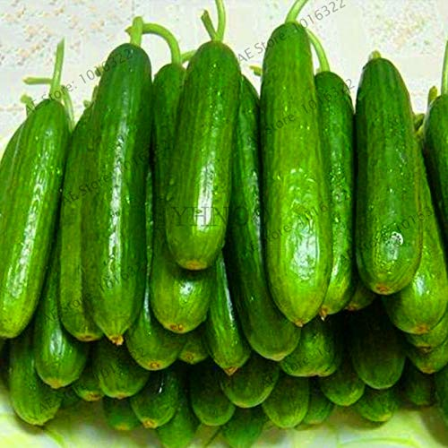 Lowest Price!100pcs/bag Long Cucumber Seeds, Chinese cucumb Organic Vegetable Garden Rare Fruit cucumbe Plant for Home Gard, nmj (Best Price Garden Seeds)