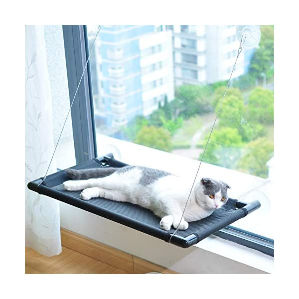 Pakeway Cat Window Perch Hammock Cat Bed with Upgraded Version 4 Suction Cups, Safest Cat Bed for Large Cat can Holds Up to 50lbs (Black) 10