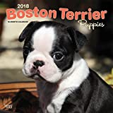 Boston Terrier Puppies 2018 12 x 12 Inch Monthly Square Wall Calendar, Animals Dog Breeds Terrier Puppies