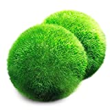 Luffy Marimo Moss Balls ​-- Beautiful ​and Natural ​Aquarium Decor ​- Absorb harmful chemical in water - Perfect heirloom Gift - Symbolize eternal love