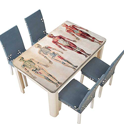 PINAFORE Polyester Tablecloth Table Cover Human Anatomy Vintage Ch of Body Front Back Skeleton and Muscle System BoneMass Graphic Ruby for Dining Room W53 x L92.5 INCH (Elastic Edge)