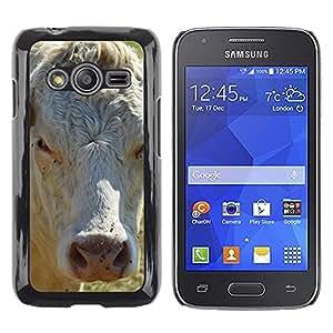 Etui Housse Coque de Protection Cover Rigide pour // M00110214 Vaca Agricultura Granja leche de vaca // Samsung Galaxy Ace4 / Galaxy Ace 4 LTE / SM-G313F