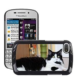 Cas Coq Case Cover // M00147987 Resaca de Maine Coon Mascota Gato de // BlackBerry Q10