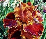 1988 Keppel - Rustler - Tall Bearded Iris Rhizome Upc 650327337398