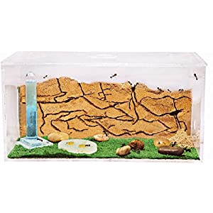 AntHouse - Formicaio Naturale di Sabbia - Kit Inizio Acrilico 20x10x10 cm (Formiche Incluse con Regina) 1 spesavip