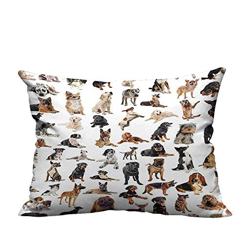 (Throw Pillow Cover for Sofa Picture with Purebred Dogs Australian Sheepdog Belgian Boxer Italian Mast Textile Crafts (Double-Sided Printing) 13.5x19 inch )