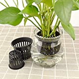 40-Pack - 2 Inch 3 Inch Net Cups, Garden Slotted