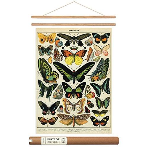 Butterflies Poster Hanger Kit Scientific Chart Vintage Style 20 x 28 -