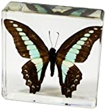 butterfly in resin - Common Blue Bottle Butterfly Paperweight(3 x 3 x 1