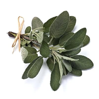 Sage (Salvia officinalis L.) Herbal Plant Heirloom Seeds, Aromatic Culinary Herb : Garden & Outdoor