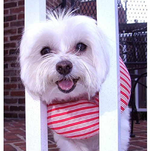 - Puppy Bumpers Keep Your Dog on the Safe Side of the Fence - Candy Stripe -up to 10