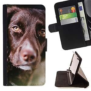 KingStore / Leather Etui en cuir / Apple Iphone 5C / Retriever chocolate raza del perro de oro