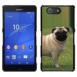 // PHONE CASE GIFT // Duro Estuche protector PC Cáscara Plástico Carcasa Funda Hard Protective Case for Sony Xperia Z3 Compact / Pug Outside Grass Puppy Dog Small /