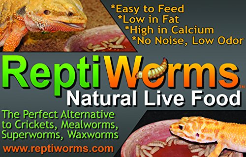 Animal Specialties BSF – Black Soldier Fly Larvae – Reptiworms Brand (1500 Count – Small) - A Nutritious Reptile (Bearded Dragon, Leopard Gecko, Crested Gecko, etc), Amphibian, Fish, Bird Food. by Animal Specialties (Image #5)