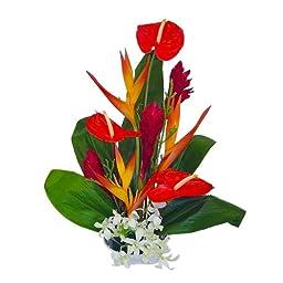 Honokohau Tropical Hawaiian Flowers