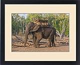 Framed Print of Asia. India. Asian elephant (Elephas maximus) used in safari tourism at