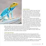 The Leopard Gecko Manual, 2nd Edition