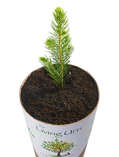 The-Living-Urn-Biodegradable-Tree-Urn-and-Planting-System-for-Pets-Including-a-Cypress-Tree-Seedling