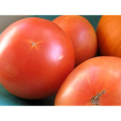 Long Keeper Tomato Seeds (100 Seeds) : Garden & Outdoor