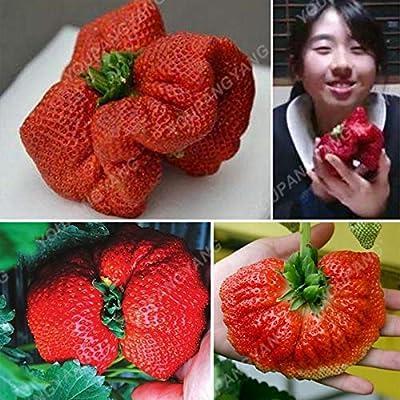 Shopmeeko 100pcs Rare Giant Strawberry Bonsai Delicious Juicy Sweet Fruit Bonsai Peculiar Bonsai Plant Courtyard Planting Bonsai: Home & Kitchen