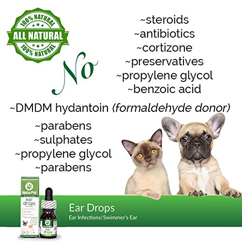 Herbs For Ear Infection In Dogs