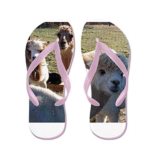 CafePress Alpaca Family Portrait??? - Flip Flops, Funny Thong Sandals, Beach Sandals Pink
