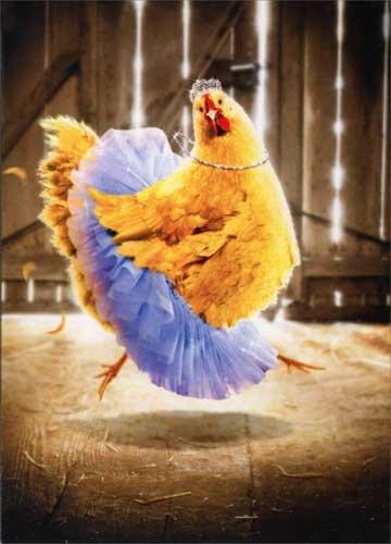 Amazon Chicken In Tutu Avanti Funny Birthday Card Kitchen Dining