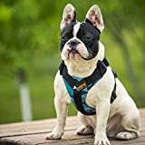 Pet Summer Step-in Harnesses Choke Free Perfect Fit X Harness for Medium Dogs, 2 Pieces Camo Blue,Large