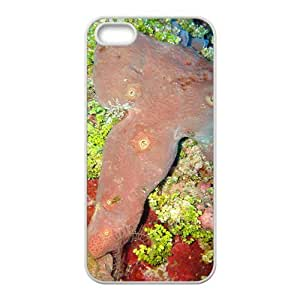 Beautiful Coral Hight Quality Plastic Case for Iphone 5s