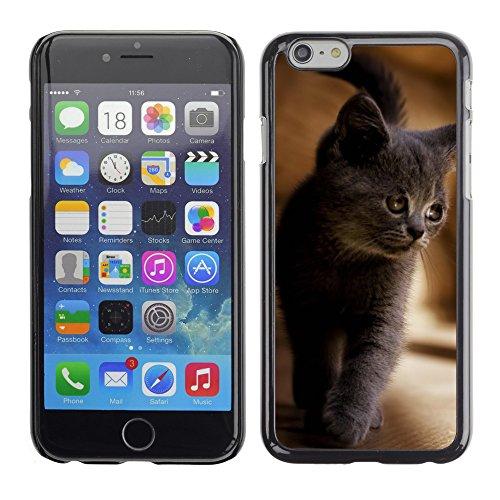 "Premio Sottile Slim Cassa Custodia Case Cover Shell // V00003368 chaton gris // Apple iPhone 6 6S 6G PLUS 5.5"""