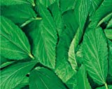 MOLOKHIA SEED (Egyptian Spinach) by Stonysoil Seed Company