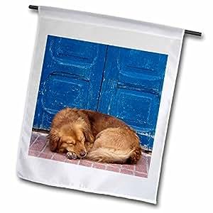 Danita Delimont - Dogs - Sleeping Dog, Essaouira, Morocco-AF29 WSU0044 - William Sutton - 18 x 27 inch Garden Flag (fl_71532_2)