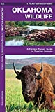 Oklahoma Wildlife: A Folding Pocket Guide to Familiar Species (A Pocket Naturalist Guide)