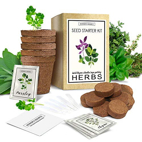 Herb Garden Starter Kit (Indoor) Natural, Organic Planting | Pots, Markers, Seed Packets, Soil Mix | Fresh Basil, Cilantro, Parsley, Sage, Thyme | Beginner Friendly (Fresh Herb Container Garden)