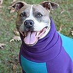 Tooth & Honey Dog Sweater/Pitbull/Large Dog/French Bulldog/Colorblock Sweatshirt/Pullover 11