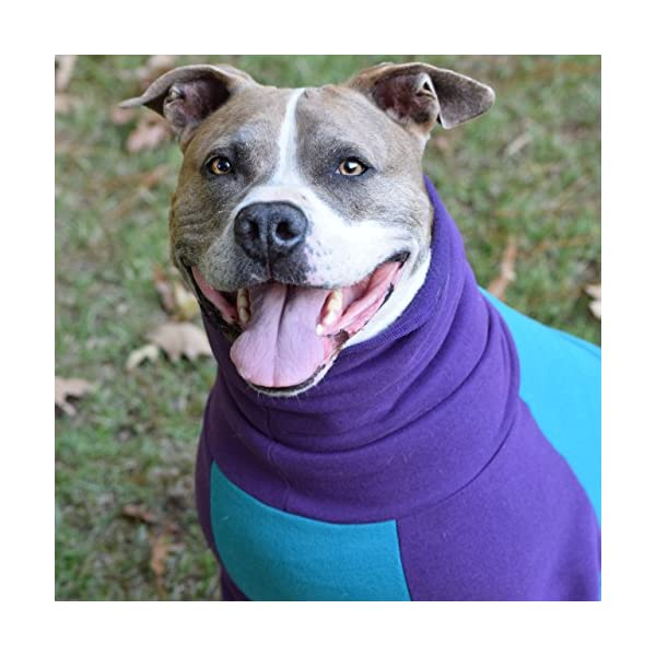 Tooth & Honey Dog Sweater/Pitbull/Large Dog/French Bulldog/Colorblock Sweatshirt/Pullover 4