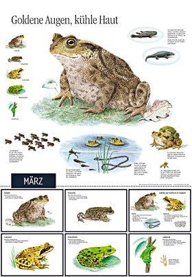 Natur erleben durch das Jahr - 2: Der zweite große Kalender zum ...