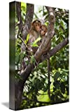 Wall Art Print entitled Two Monkeys In A Tree Tamil Nadu, India by Design Pics
