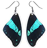 Real Butterfly Wing Earrings - Papilio Bromius Top Wing