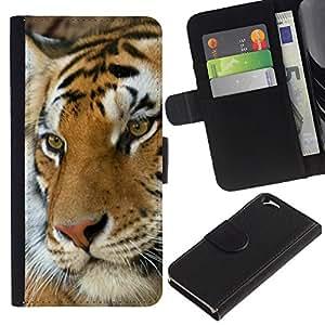 KingStore / Leather Etui en cuir / Apple Iphone 6 / Tiger felino animal lindo de Orange Africa