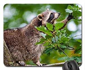 Raccoon in a tree Mouse Pad, Mousepad