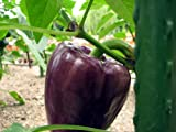 Lilac Sweet Pepper 4 Plants - Gourmet
