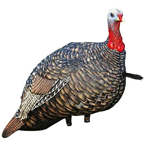 Strut Turkey - 6
