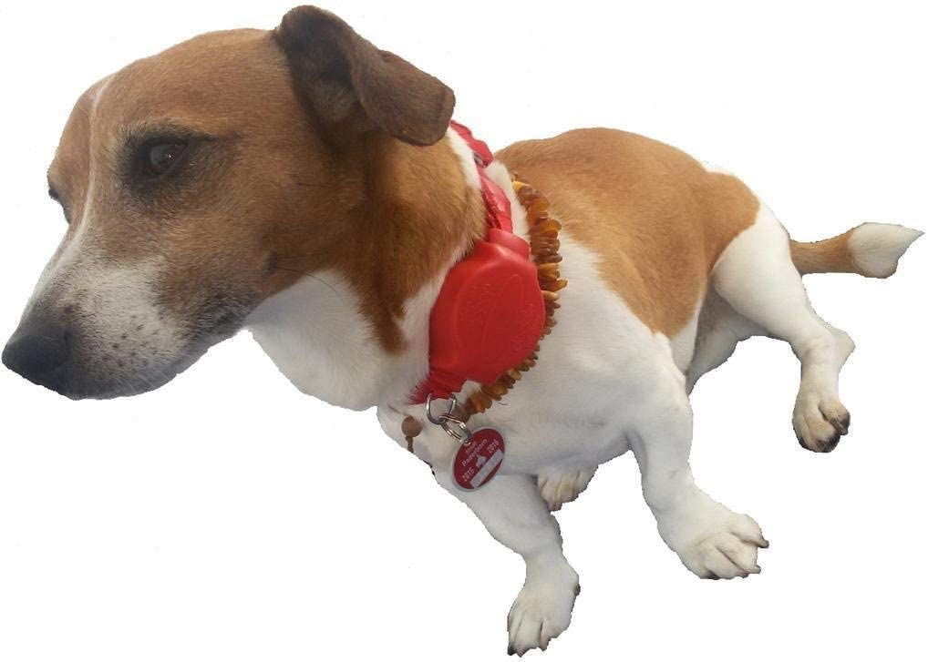 Halsband Doodle for Dogs mit Halsband /& Automatikleine Gr/ö/ße M+