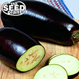 Black Beauty Eggplant Seeds - 150 Seeds Non-GMO