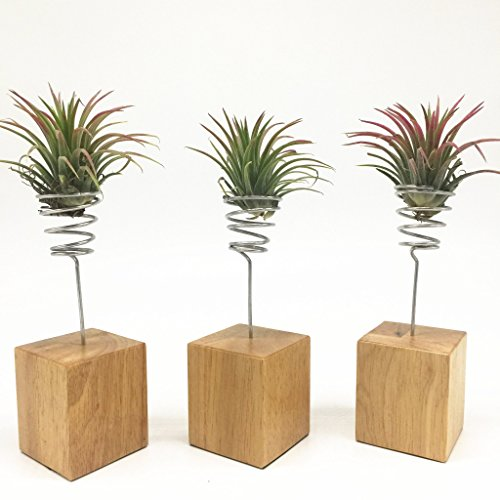 Air Plant Stand Tillandsia Air Plant Holders Ionantha Tillandsia Air Plant Containers, Pack of 3