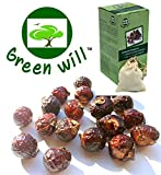 organic soap nuts - 1.5 Pounds Greenwill Organic Soapberry / Soap Nuts (375 Loads) with 1 Wash Bag