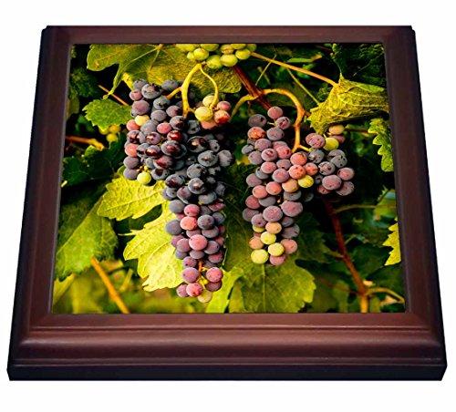 3dRose trv_206892_1 USA, Washington, Okanogan Valley, Omak Pinot Grapes in Vineyard Trivet with Ceramic Tile, 8 by 8