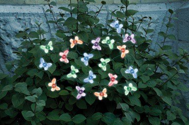 Translucent Bulb Light Set (Smart Solar 3705MR20 Solar Light String, 20 Multi Color LEDs with Translucent Butterfly Covers Powered By A Separate Amorphous Solar Panel Allowing Lights To Be Placed In Shady Areas)